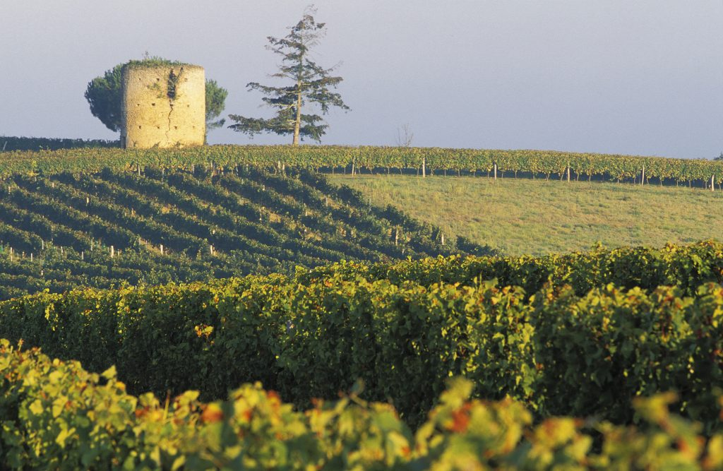 Armagnac vineyards