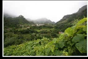 Wine/fortified Wine/madeira